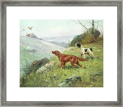 A Study Of Gun Dogs Framed Print