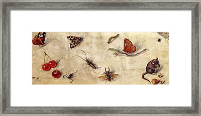 A Study Of Various Insects, Fruit And Animals Framed Print by Jan Van Kessel the Elder