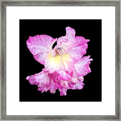 A Succulent Gladiola Framed Print