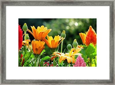 A Summer Celebration Framed Print by Angela Davies