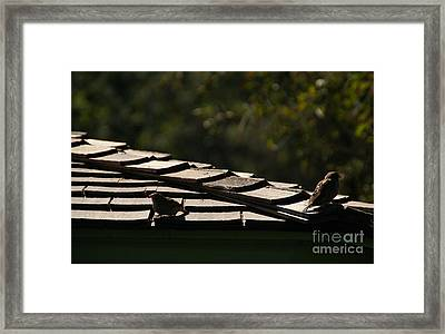 A Summers Day Framed Print by Linda Shafer