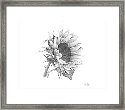 A Sunflowers Beauty Framed Print