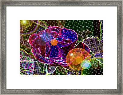 A Sunlit Blossom  Framed Print by Jeff Swan