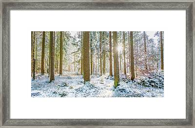 Framed Print featuring the photograph A Sunny Day In The Winter Forest by Hannes Cmarits