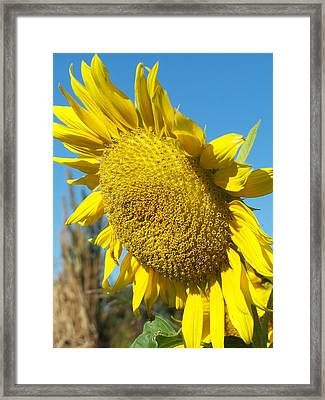 Framed Print featuring the photograph A Sunny Hello by Sandy Collier
