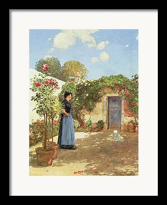 Morning Sun On Vines Paintings Framed Prints