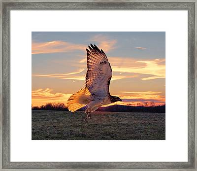 A Sunset Flight Framed Print