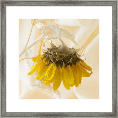 A Suspended Sunflower Framed Print