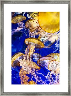 A Swarm Of Jellies Framed Print by MaryJane Armstrong