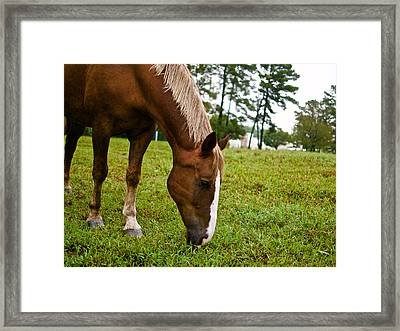 A Sweet September Framed Print
