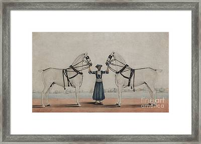 A Syce, Groom, Holding Two Carriage Horses Framed Print
