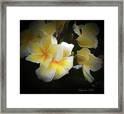A Symbol Of Grace Framed Print