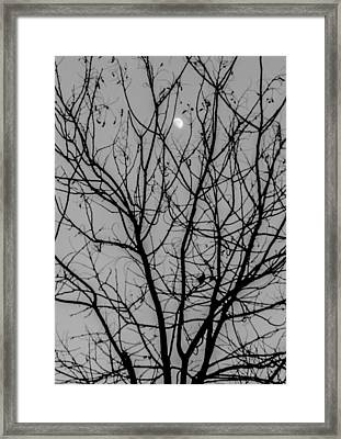 A Tale Of Magic Framed Print by Andrea Mazzocchetti
