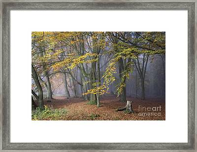 A Tale Of Two Paths Framed Print by Tim Gainey