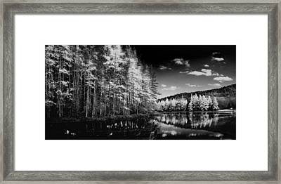 A Tamarack Panorama Framed Print by David Patterson