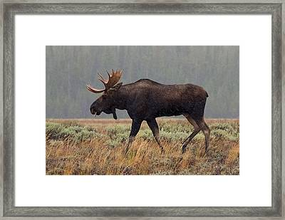 A Taste Of Rain Framed Print