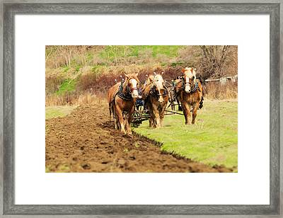 A Team Of Horses At Work Framed Print by Jeff Swan