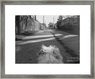 A Terriers Perspective Framed Print by Reb Frost