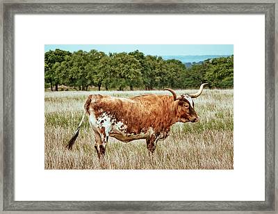 Framed Print featuring the photograph A Texas Legend by Linda Unger