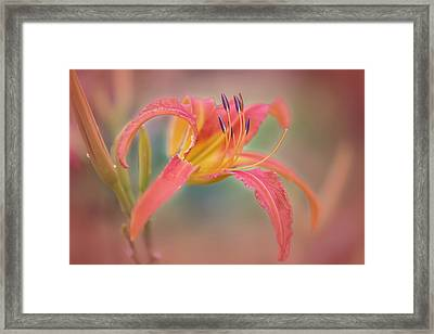 A Thing Of Beauty Lasts Only For A Day. Framed Print