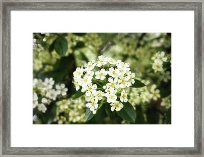A Thousand Blossoms 3x2 Framed Print