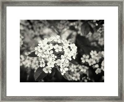 A Thousand Blossoms In Sepia 3x4 Flipped Framed Print