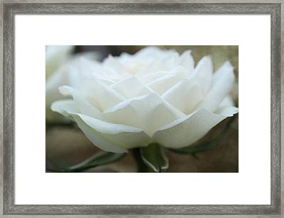 A Thousand Petals Framed Print by Connie Handscomb