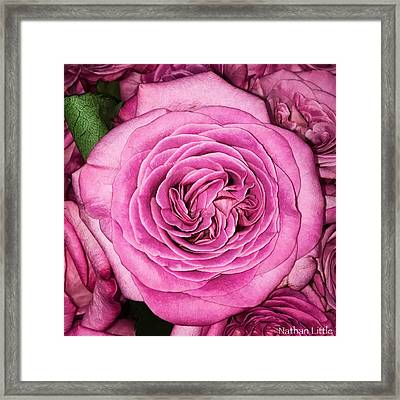A Thousand Petals Framed Print
