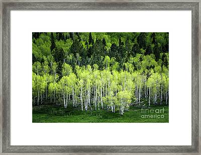 Framed Print featuring the photograph A Thousand Shades Of Green by The Forests Edge Photography - Diane Sandoval