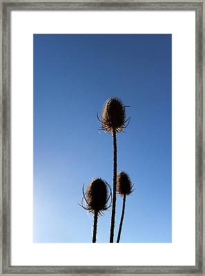 Framed Print featuring the photograph A Thriving Trio 2 by Helga Novelli