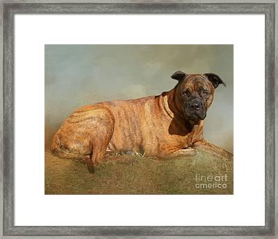 A Tibute To Major The Bullmastiff Framed Print