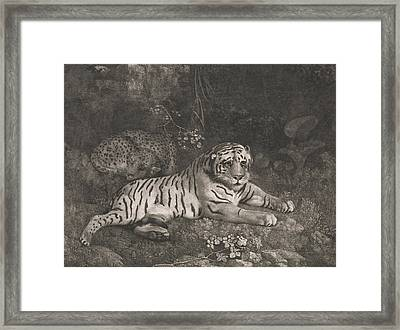 A Tiger And A Sleeping Leopard Framed Print