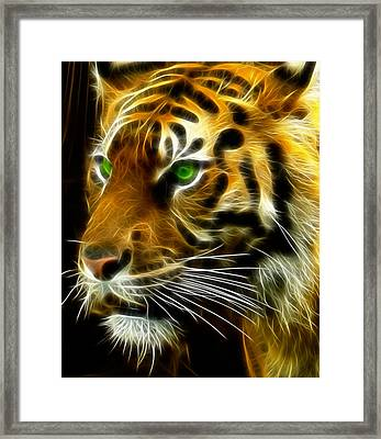 A Tiger's Stare Framed Print