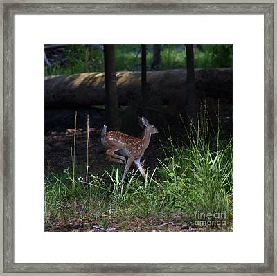 A Time To Play Framed Print
