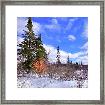 A Touch Of Autumn On North Street Framed Print by David Patterson