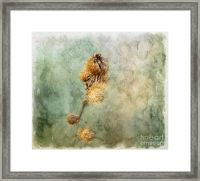 A Touch Of Beauty Framed Print by Brenda Bostic