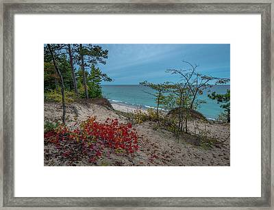 A Touch Of Color  Framed Print