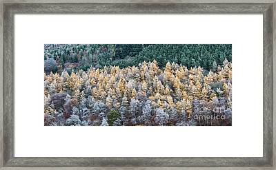 A Touch Of Frost Framed Print by Tim Gainey