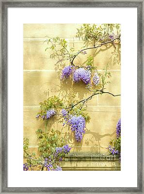 A Touch Of Lilac Framed Print by Tim Gainey