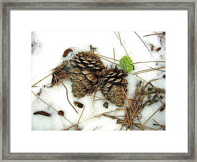 A Touch Of Moss Framed Print by Will Borden