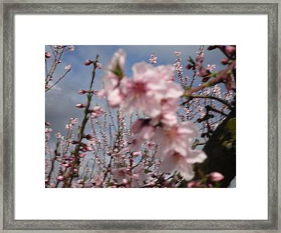 A Touch Of Pink 4 Framed Print by Susanne Awbrey