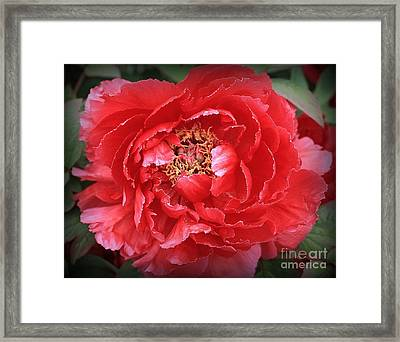 A Touch Of Pink On Red Peony Framed Print by Dora Sofia Caputo Photographic Art and Design