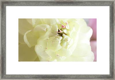 Framed Print featuring the photograph A Touch Of Pink by Wendy Wilton