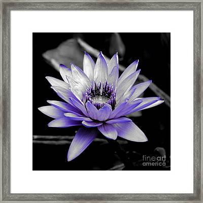 A Touch Of Purple Framed Print by Carol Groenen