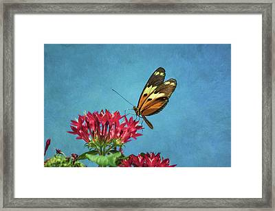 A Touch Of Summer Framed Print by Kim Hojnacki