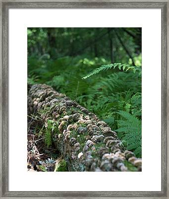 A Touch Of Sun Framed Print