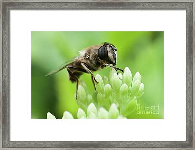 A Touch Framed Print