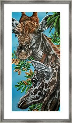A Tower Of Giraffes Framed Print