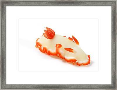 A Toxic Glossodoris Averni Nudibranch Framed Print by David Doubilet
