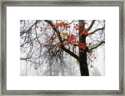 A Trace Of Autumn Framed Print by Terry Davis